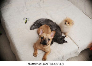 Adorable dogs and cute cat lying together