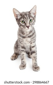 An adorable Domestic Shorthair Four Month Old Kitten Sitting while looking forward.  Beautiful green eyes are stunning.