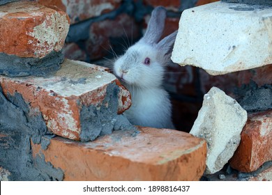 Adorable easter bunny. Cute animal in urban decoration. Unity with nature concept