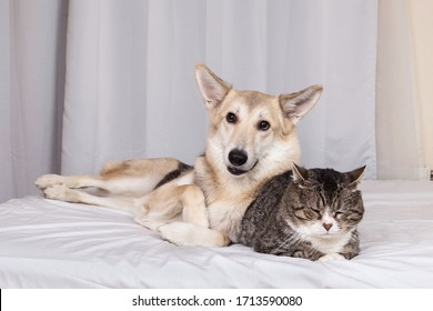 Adorable excited mixed breed dog and sleeping cat resting on bed covered white sheet in living room