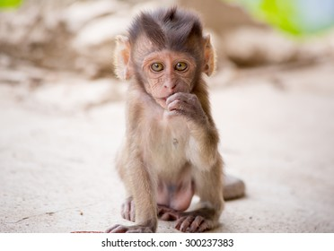Adorable face of baby asian monkey