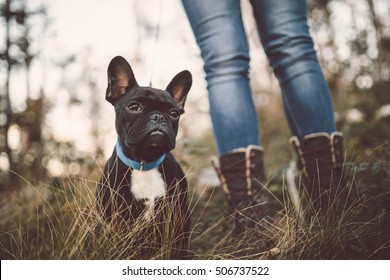 Adorable French bulldog puppy nature outdoors. Dog sitting in deep forest grass.