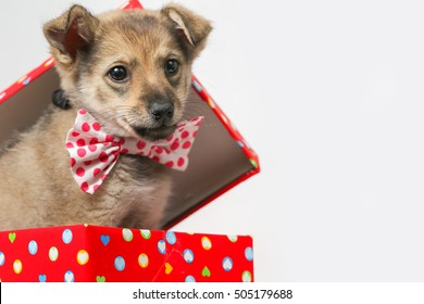 Adorable Funny Puppy in a red Cardboard Box