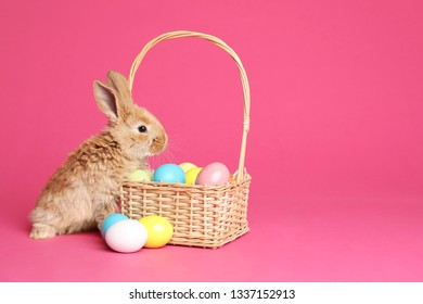 Adorable furry Easter bunny near wicker basket and dyed eggs on color background, space for text