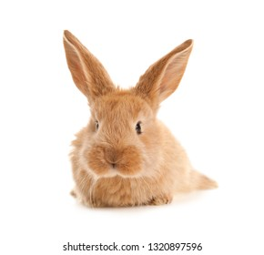 Adorable furry Easter bunny on white background