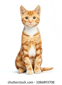 Adorable ginger red tabby kitten sitting, curious and isolated on white background.