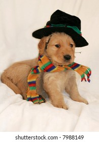 adorable golden retriever puppy with hat and scarf