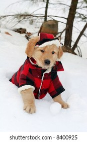 adorable golden retriever puppy in plaid hat and coat sitting in hole in snow