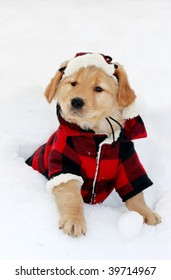 adorable golden retriever puppy wearing plaid jacket and hat and sitting in snow