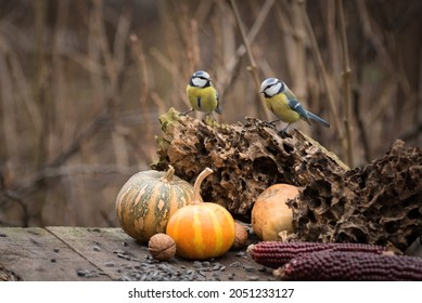 Adorable Great tit birds eating sunflower seeds from an old wooden table in the autumn garden. Fall seasonal background with yellow pumpkin maizes and little birds.