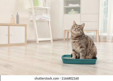 Adorable grey cat in litter box indoors. Pet care