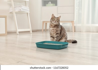 Adorable grey cat near litter box indoors. Pet care