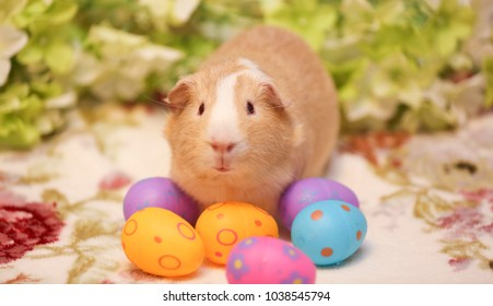 Adorable guinea pig with basket of Easter eggs