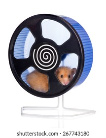 adorable hamster in a wheel