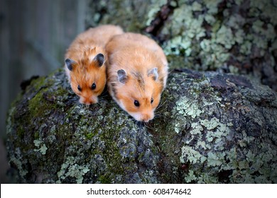 Adorable hamsters outdoor