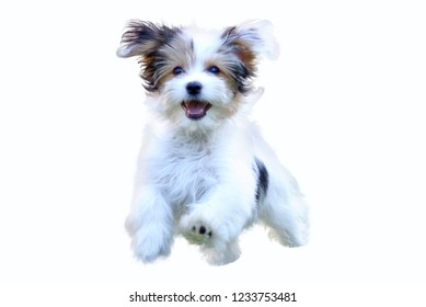 An adorable, happy puppy caught in motion while running against white background