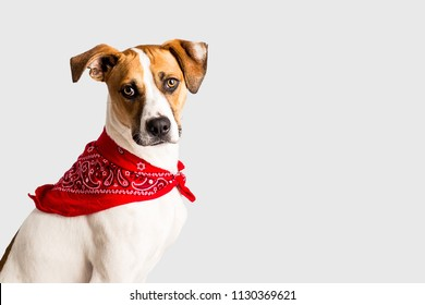 Adorable hound with bandana