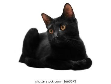 Adorable isolated black kitten