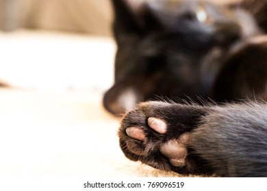 Adorable Jellybean Toes