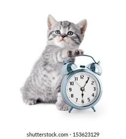 adorable kitten with alarm clock