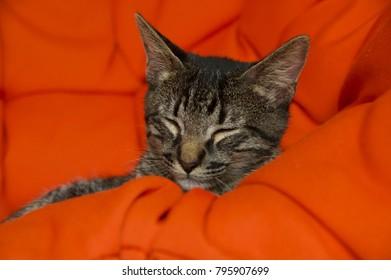 Adorable kitten enjoying its sleep.