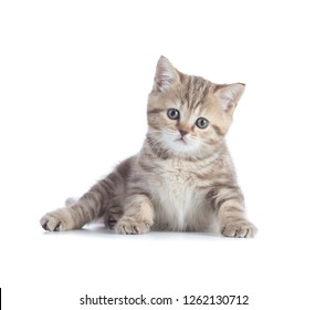 Adorable kitten lying isolated and looking directly to camera