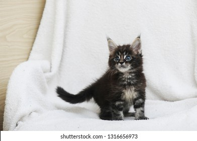 Adorable kitten on white