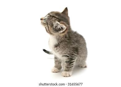 Adorable kitten on white background
