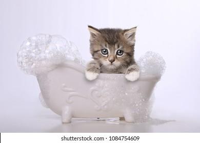 Adorable Kitten Perfect for a Calendar
