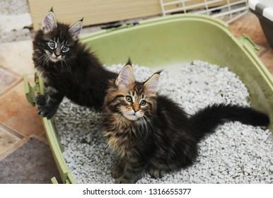 Adorable kitten sitting in cat litter