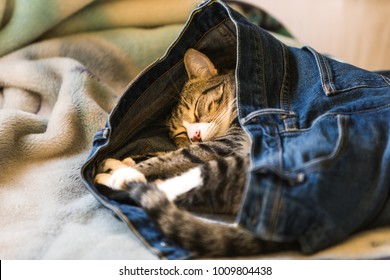 An adorable kitten sleeping in someones denim blue jeans on a bed
