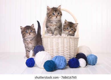 Adorable Kittens With Balls of Yarn
