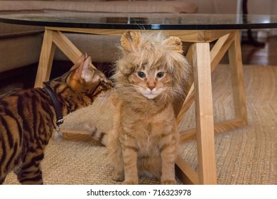 adorable lion costume on orange tabby cat and striped toyger kitten in house