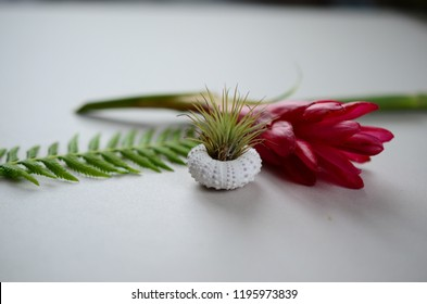 Adorable little air plant in shell. Bohemian decoration, little bromeliad in a shell with fern and ginger plant. Nature mockup, colors live plants. Bright Vibrant colors. Green, Pink and White