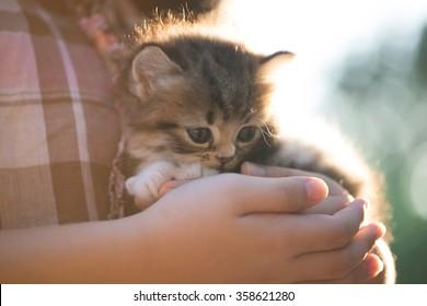 Adorable little asian girl giving her kitten a hug