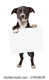 An adorable little black and white mixed breed puppy holding up a blank white sign to add your marketing message to