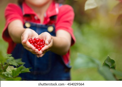 Adorable little boy, holding red currants in his hands, making shape of heat, freshly gathered