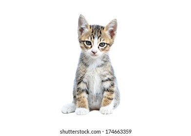 Adorable little brown-gray cat isolated on white background