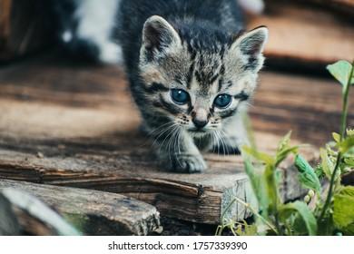 Adorable little cat catches the prey