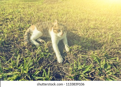 adorable little cat play on the grassland