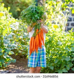 Adorable little child with carrots in domestic garden. Kid gardening outdoors. Healthy organic vegetables for kids