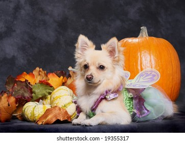 adorable little dog in halloween costume with pumpkins