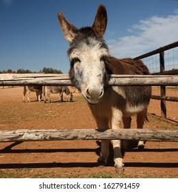 adorable little donkey