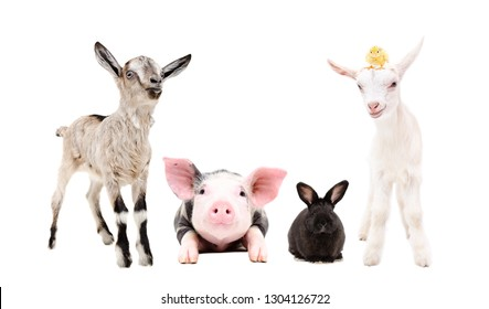 Adorable little farm animals standing together isolated on white background