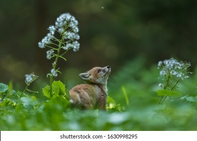 adorable little fox puppy with white flower in dark green forest
