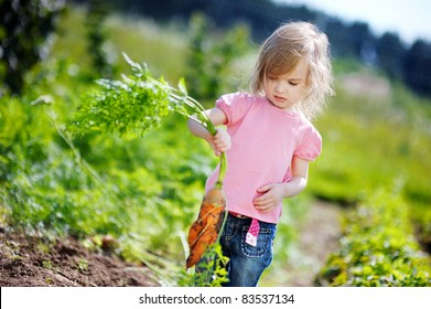 Adorable little girl picking carrots in a garden