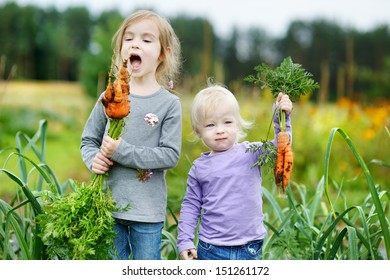 Adorable little girls picking carrots in a garden