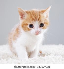 adorable little kitten on white background