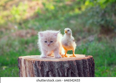 Adorable little kitten with a small chicken