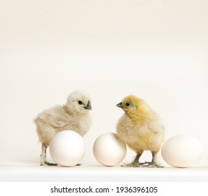Adorable little newborn chicks on a white background with eggs